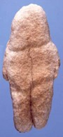 Venus of Tan-Tan: Prehistoric Rock Carving: Stone Age Figurine ...